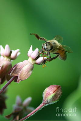 Photograph - Working Honey Bee by Neal Eslinger