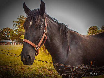 Photograph - Working Horse I by Barry Jones