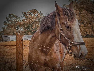 Photograph - Working Horse II by Barry Jones