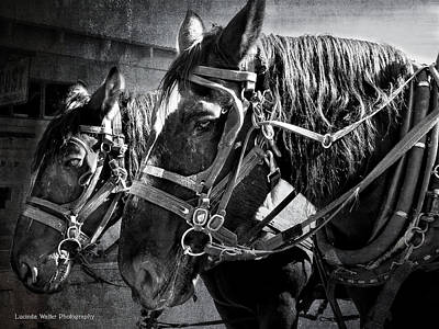 Photograph - Working Horses by Lucinda Walter