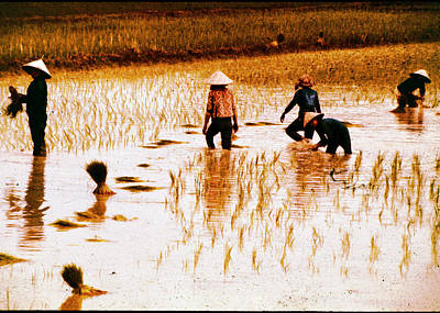 Photograph - Working In Rice Patties by John Warren