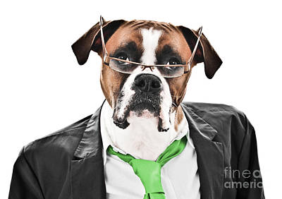 White Boxer Dog Photograph - Working Like A Dog by Jt PhotoDesign