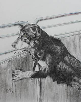 Kelpie Drawing - Working Mother by Leonie Bell