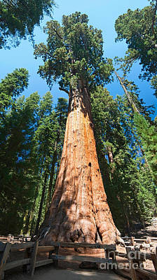 Photograph - World Famous General Sherman Sequoia Tree In Sequoia National Park. by Jamie Pham