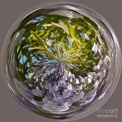 Manipulation Photograph - World Of Wisteria by Anne Gilbert