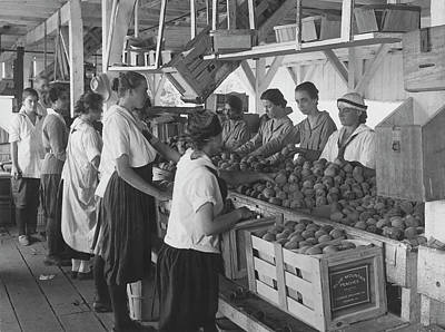 World War I Farmerettes Packing Peaches Art Print