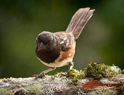 Sparrow Photograph - Worm Watch by Jean Noren