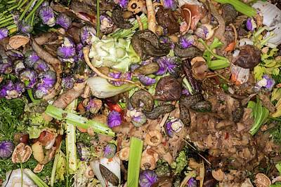 Worms And Slugs In A Compost Bin Art Print