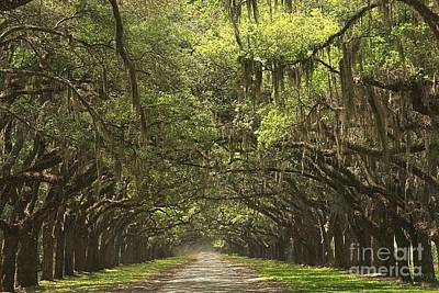 Photograph - Wormsloe Avenue Of The Oaks by Adam Jewell