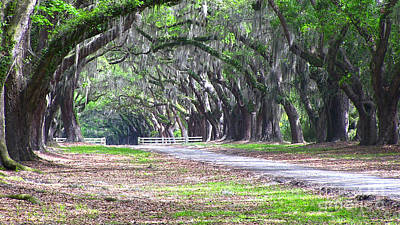 Photograph - Wormsloe Drive 2 by D Wallace