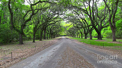 Photograph - Wormsloe Drive by D Wallace