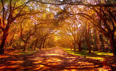 Photograph - Wormsloe Historic Plantation by Mark Andrew Thomas