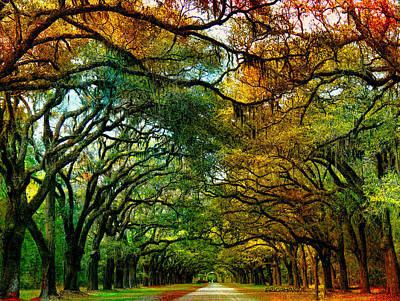 Chatham Digital Art - Wormsloe Plantation by EricaMaxine  Price