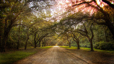 Photograph - Wormsloe Plantation by Mark Andrew Thomas
