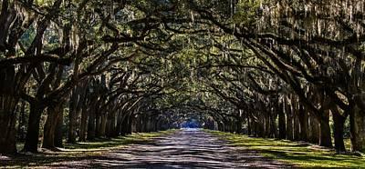 Dappled Light Photograph - Wormsloe Plantation Savannah by Henry Kowalski