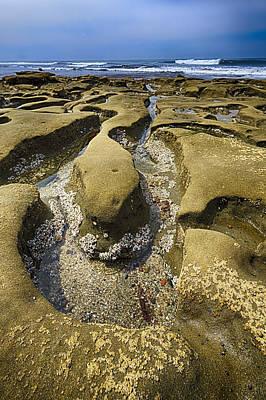 Algae Photograph - Wormwood 2 by Scott Campbell
