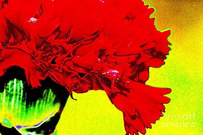 Abstract Flowers Royalty-Free and Rights-Managed Images - Wow carnation by Carol Lynch