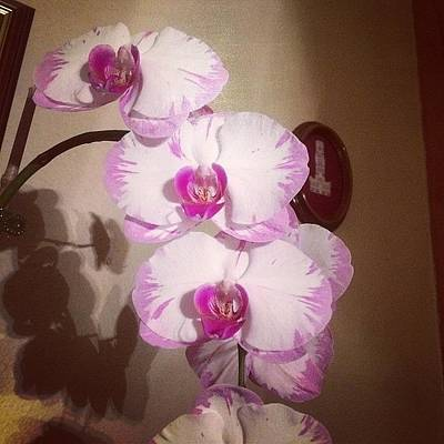 Orchids Photograph - Wow Pretty #orchids # Flowers by Ann Marie Donahue
