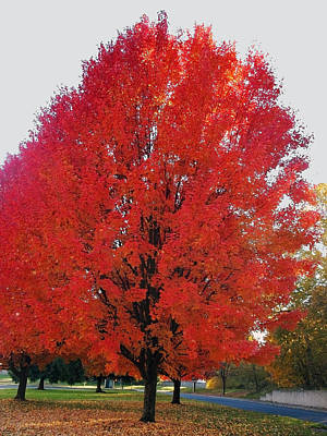 Photograph - Wow What A Tree by Teri Schuster