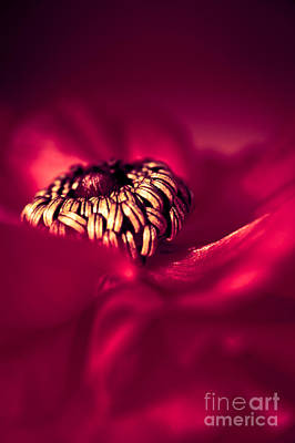 Stamen Photograph - Wrap Me In Red by Jan Bickerton