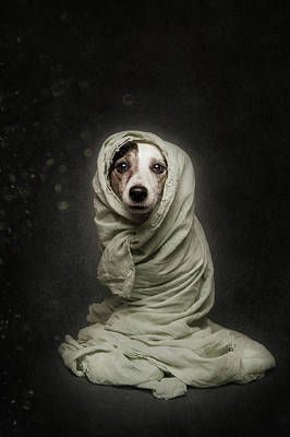 Funny Dog Wall Art - Photograph - Wrapped by Heike Willers