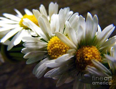 Photograph - Wreath Of Daisies by Nina Ficur Feenan