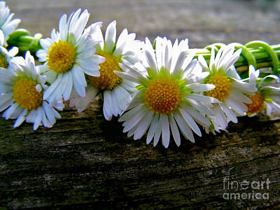 Photograph - Wreath Of White Daisies by Nina Ficur Feenan