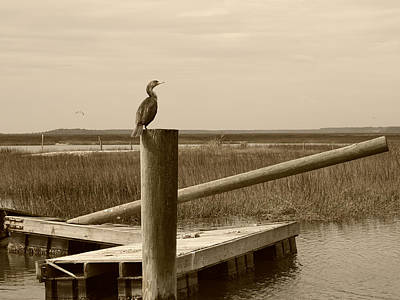 Photograph - Wrecked Dock With Cormorant 1 Sepia by MM Anderson