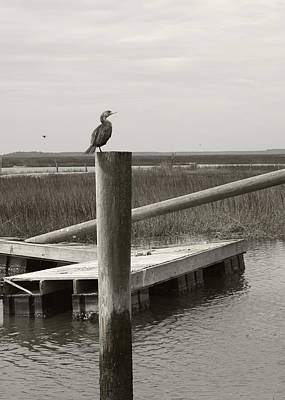 Photograph - Wrecked Dock With Cormorant 2 Greyscale by MM Anderson