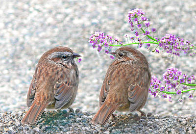 Photograph - Wren Bird Sweethearts by Jennie Marie Schell