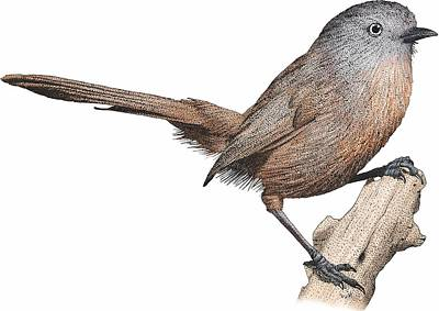 Photograph - Wrentit by Roger Hall