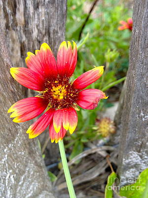 Photograph - Wrightsville Wildflower by M West