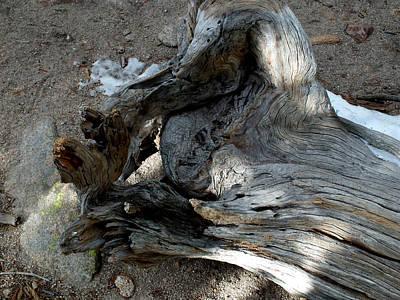 Photograph - Wrinkled Dead Tree by Thomas Samida