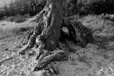Photograph - Writhing Tree by Maria  Disley
