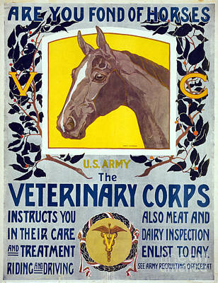 Painting - Wwi Veterinary Corps by Granger