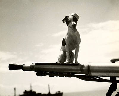 Photograph - Wwii Uscg Mascot Named Kelly by Historic Image