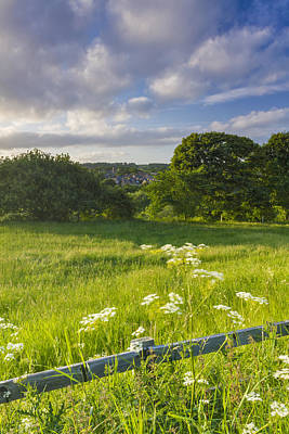 Cow Parsley Wall Art - Photograph - Wylam Summer Evening by David Taylor