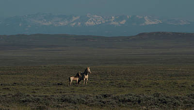 Photograph - Wyoming Beauty by Angelique Rea