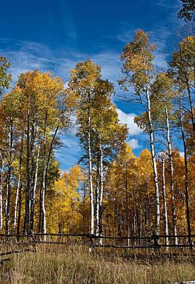 Wyoming Golden Fall Aspens Art Print by John Haldane