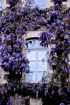 Photograph - Wysteria Window Frame by Eric Tressler