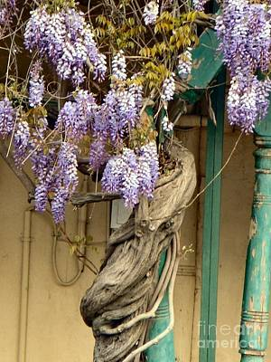 Photograph - Wysteria Wrapped Column by Audrey Van Tassell