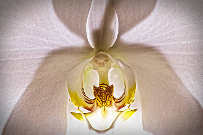 Orchids Photograph - X File by John  Nickerson