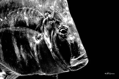 Ray Swanson Photograph - X-ray Fish by Jeff Swanson