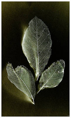 Photograph - X-ray Leaves by Weston Westmoreland