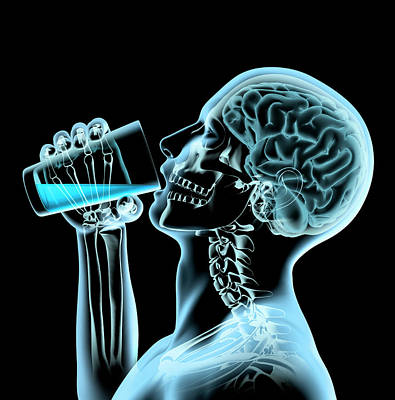 Photograph - X-ray Of Man And Brain Drinking by Ikon Ikon Images