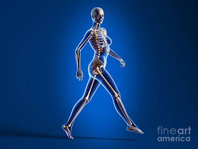 Human Skeleton Digital Art - X-ray View Of A Naked Woman Walking by Leonello Calvetti