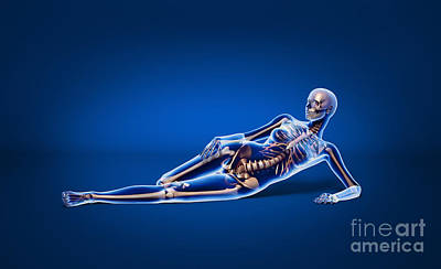 True Ribs Digital Art - X-ray View Of A Woman Laying by Leonello Calvetti