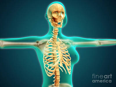 Human Skeleton Digital Art - X-ray View Of Female Upper Body Showing by Stocktrek Images