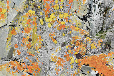 Xanthoria Lichen On A Rock Art Print