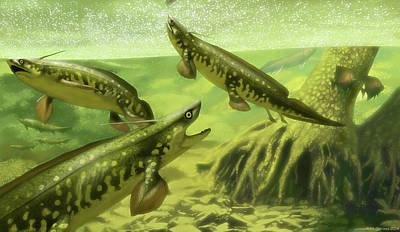 Xenacanthus Decheni Prehistoric Sharks Art Print by Jaime Chirinos